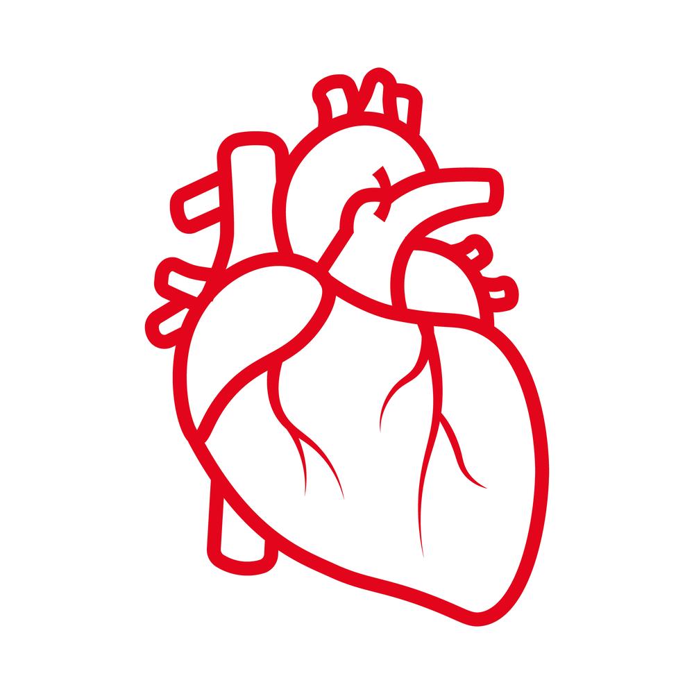 """מנהל היחידה לאקוקרדיוגרפיה (אקו לב) והמרפאה למחלות מסתמי הלב במרכז הרפואי רמב""""ם"""